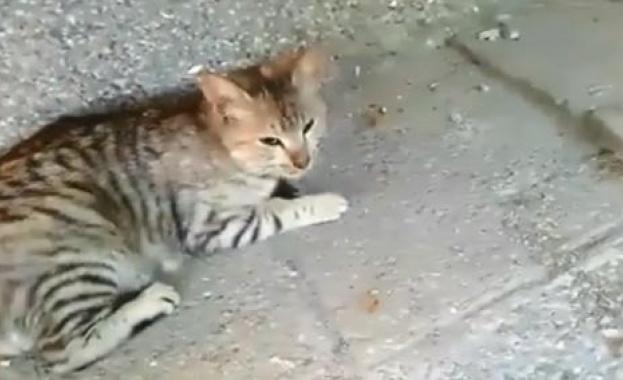 Австралийка радостно посрещна котката си, която се прибра у дома,