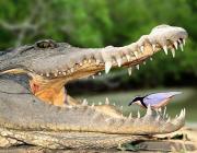 В Московския зоопарк умря любимият алигатор на Хитлер