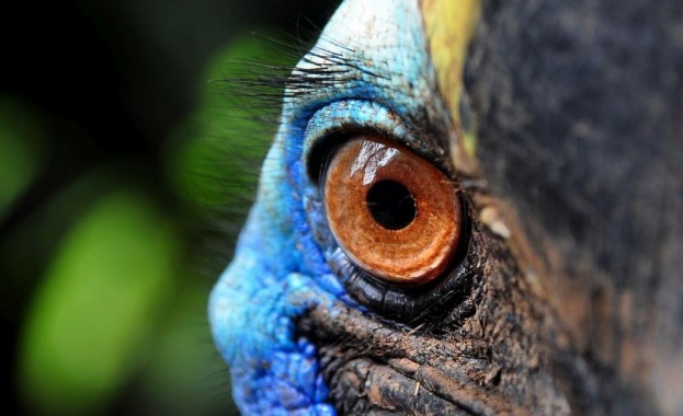 Казуар, считан за най-опасната птица в света, уби стопанина си