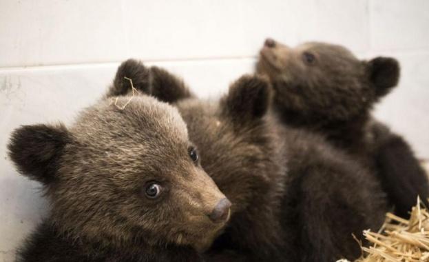 Заснеха мечка с две мечета под Рилския манастир. В дирекцията