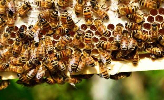 Учени дешифрираха танца на пчелите