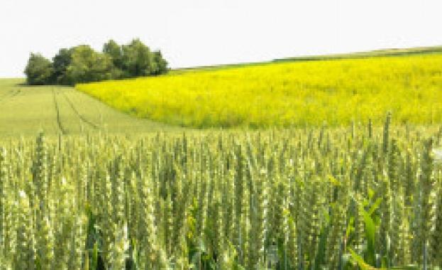 Монделийз Интернешънъл разширява програмата за устойчив добив на пшеница в Европа
