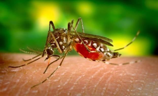 Продължава извършването на обработки на тревните площи срещу възрастни комари