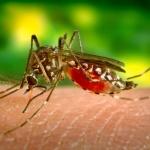 Вирус, пренасян от комарите, е свързан с инсулта