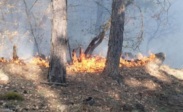 """""""236 са регистрираните пожари в горските територии от началото на"""