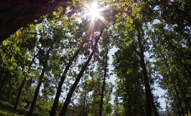 Слънчев неделен ден – най-доброто от есента