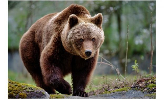 """Зоопарк във Финландия предлага услугата """"нощувка с мечки"""""""