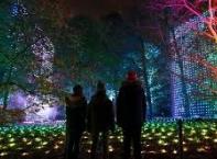 Коледна магия в Кралската ботаническа градина