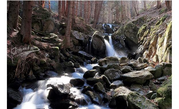 Две реки потекоха в черно в района на Старосел. Рибата измря