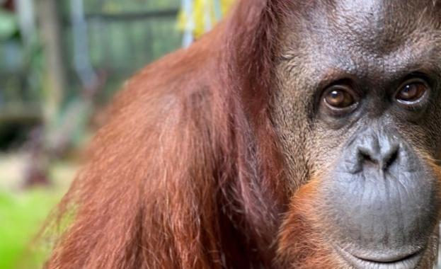 Няколко маймуни в индийския щат Утар-Прадеш нападнали лаборант, докато носел