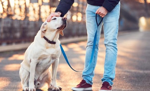 По време на карантина: Полезни съвети за стопаните на кучета