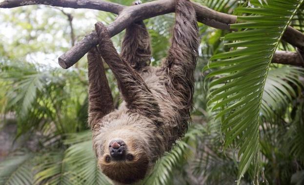 Палеонтолози откриха в Еквадор гигантски ленивец, живял преди повече от