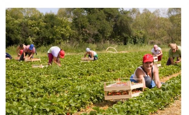 Светла Василева, КНСБ: Завърналите се от чужбина сезонни работници да помогнат тук