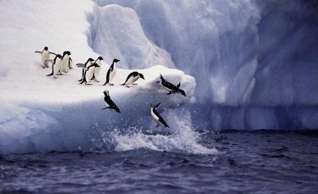 Младите антарктици участват на Софийския фестивал на науката утре