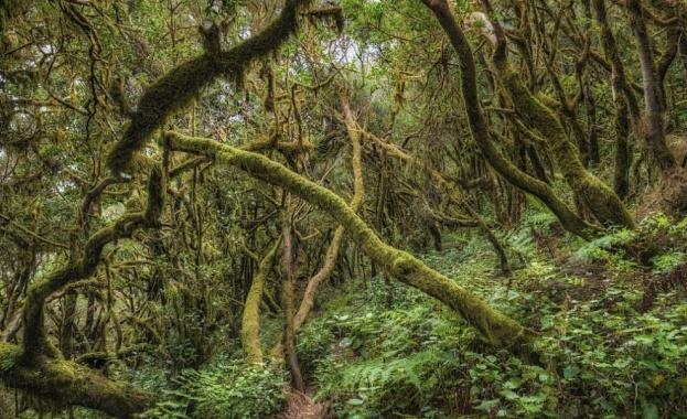 Преди около 90 милиона години умерена дъждовна гора е израсла