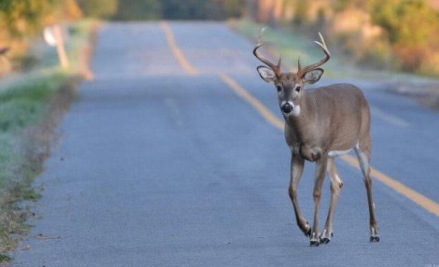 Според експерти животните са влезли в града, защото вече няма