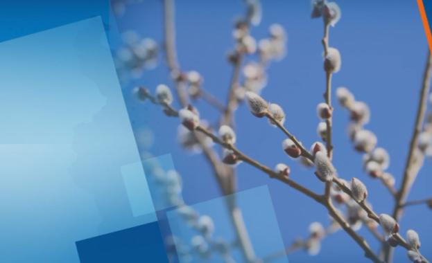 Католическият свят отбелязва Цветница или още Палмова неделя. Днешният ден