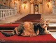 Котките на Ермитажа могат да се видят онлайн