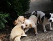 Доказано: кучета могат да надушват коронавирус