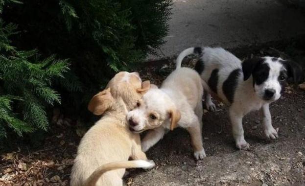 Приютите за животни в САЩ се изпразват в резултат на