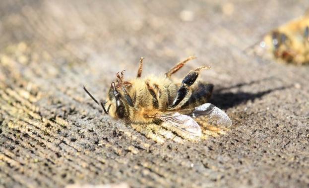 Пчеларите ще бъдат обезщетени с 3 млн. лв. заради унищожените от сушата пчелни семейства