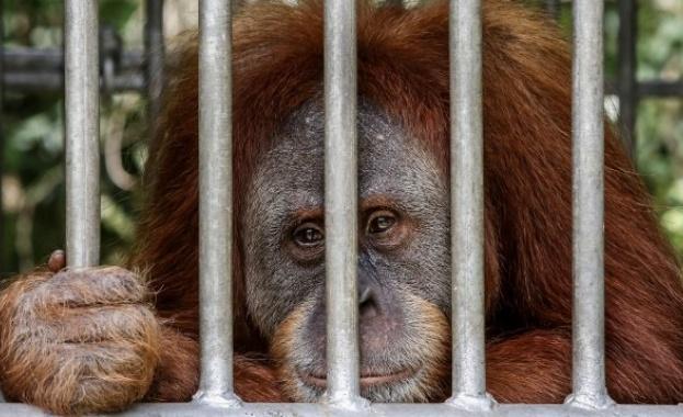 Унищожаването на местообитанията на животните води до по-смъртоносни пандемии