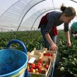 Икономиките в Западна Европа са зависими от източноевропейските работници