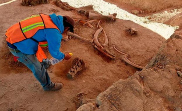 Археолози откриха останките на повече от 60 мамута край столицата
