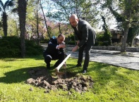 Поставят паметна плоча за Дърво на мира в Созопол