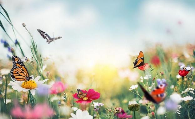 Изложба с някои от най-красивите тропически пеперуди се открива днес