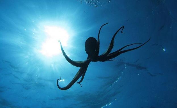 Учени заснеха октопод на най-голямата известна дълбочина досега - на