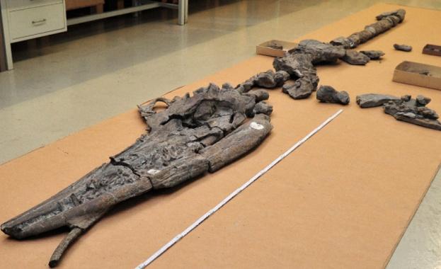 Открити в Невада, САЩ, фосили са на бременен женски ихиозавър