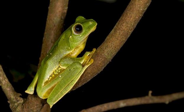 Палеонтолози от Аржентина са открили фосилизирани останки на жаба, обитавала
