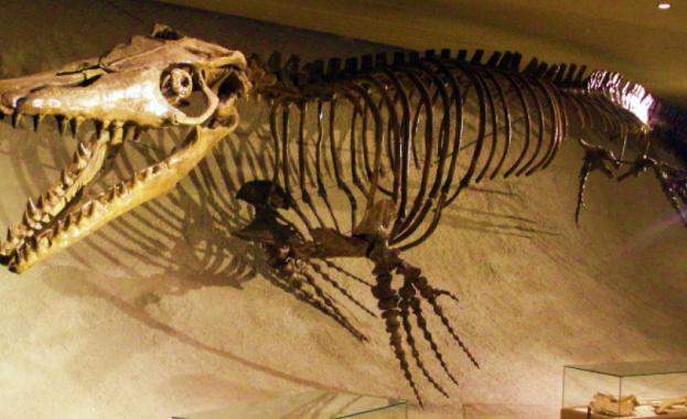 Международен екип от учени установи, че мистериозната вкаменелост във формата