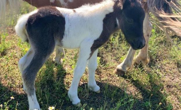 Единствените у нас свещени ибиса са в Зоопарк Бургас, роди се и трицветно бебе пони