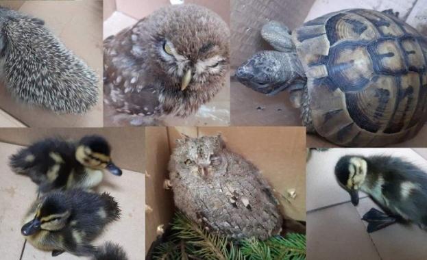Пет екземпляра от защитени видове съгласно Закона за биологичното разнообразие