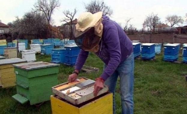 Животновъдите и пчеларите могат да кандидатстват за финансово подпомагане по