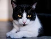 Защо трябва да галим домашните котки и кучета
