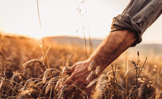 Земеделци: Щетите са огромни, липсват източници на напояване