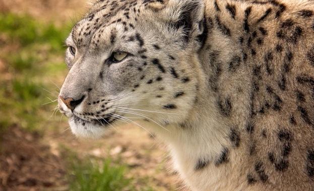 Столичната зоологическа градина вече разполага с единствения на Балканите много