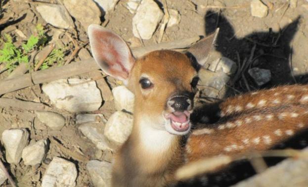 Роди се петнисто виетнамско еленче в столичния зоопарк