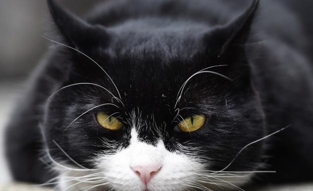 Два потвърдени случая на коронавирусна инфекция при домашни животни са