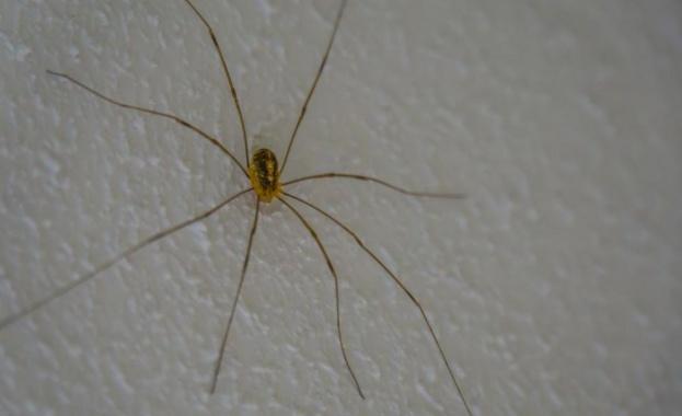 Радвайте се на този паяк вкъщи – ще ви отърве от отровни гости