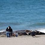 Труп на кит беше изхвърлен на популярен плаж на остров Бали