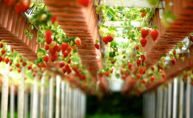 Великобритания ще наема по-малко българи за сезонна работа