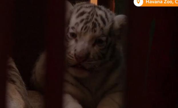 Служителите на кубинския Национален зоопарк в Хавана празнуват появата на