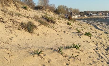 """Прокуратурата иска допълнителни действия по проверката на плаж """"Смокиня"""""""
