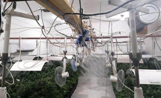 Разкриха високотехнологична оранжерия за марихуана край Брацигово