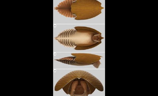 """Откриха останки от древното създание """"корабa майка"""""""