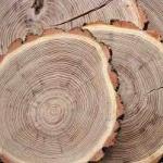 Търгове за близо 85 млн. лв. са проведени през платформата за електронна продажба на дървесина
